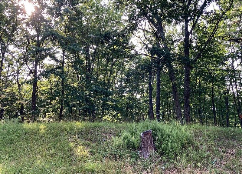 جنگل اس ای